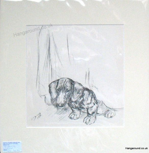 Smooth Haired Dachs - Dax B2 -  sitting under curtain  1940's print by K F Barker
